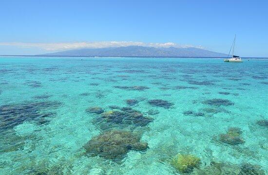 Μουρέα, Γαλλική Πολυνησία: Morning view of Tahiti Island from Moorea - we had this amazing view  from our overwater bungalow !
