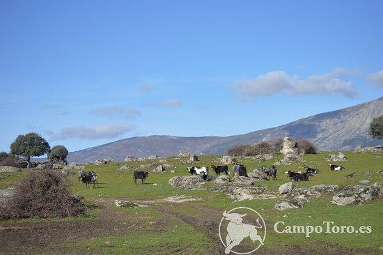 Sierra madrileña, un oasis a 20 min de la ciudad. Visitas guiadas.