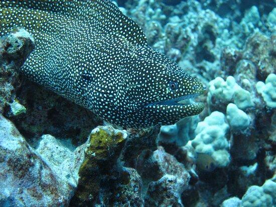 Nice eel