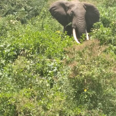 Meru Town, كينيا: Elephant at imenti forest in meru county kenya 