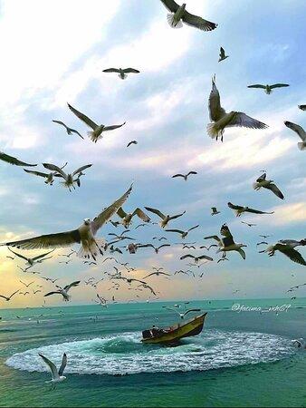 ❤️🌹 Iran 🇮🇷 Persian Gulf 😍 Bushehr Beach 🏖