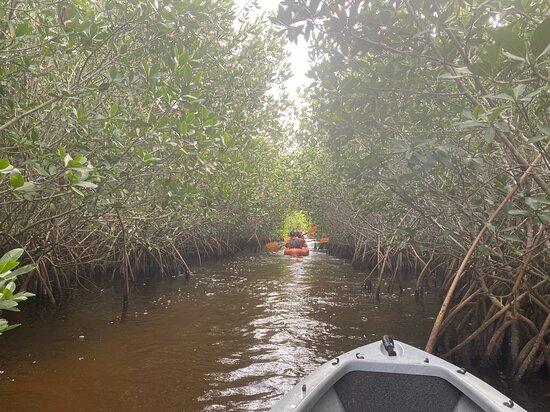 Manatees and Mangrove Tunnels Small Group Kayak Tour Photo