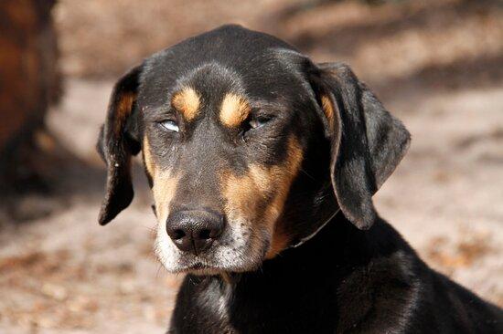 Désolé mais plus de 20 chiens difficile de se rappeler  des noms