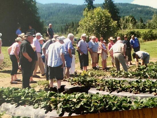 Sandy Acres Berry Farm