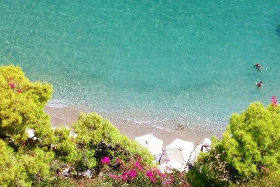 Dolphin Hellas