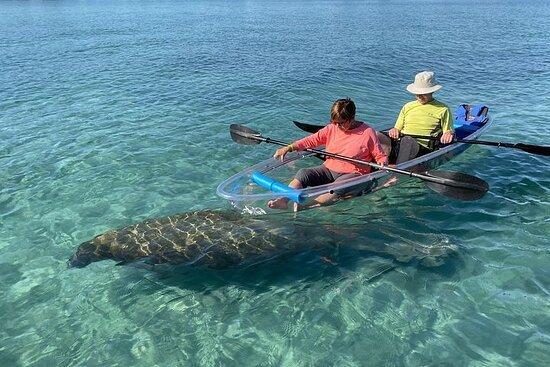 Clear Kayak Tour in Jupiter