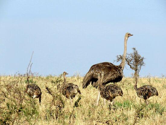 Tanzania/Serengeti - October 2020