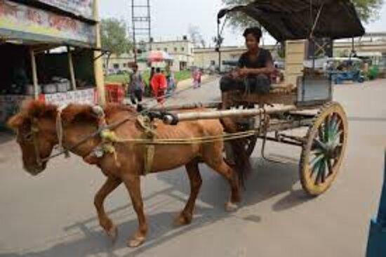 Murshidabad, India: Horse ride