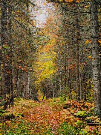 Champion, MI: Pleasant hiking