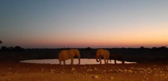 Etosha National Park, Namibia: Elefantes en una charca del Parque Nacional de Etosha
