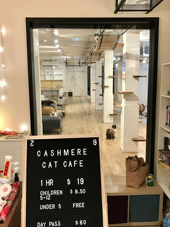 Foyer with window into 'cat space', there's a little shop with gifts the owner has designed based on their cats.