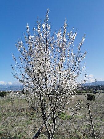 Preciosa la primavera.