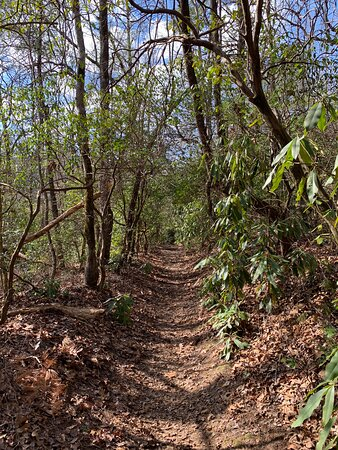 Part of the Benton Mackaye Trail once it levels off from the rocky part of the hike
