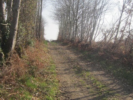 Dolmen du Bois Plantaire. Vue 72. Hameau La Rondière. Lieu-dit Le Boiron. Orsennes 36190.