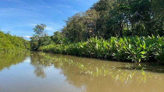 visite dans les mangroves, oiseaux, singes congo, singe mono titi, meme vu un crocodile