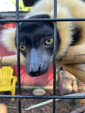 Photos of sons of the animals you will find at Chase.