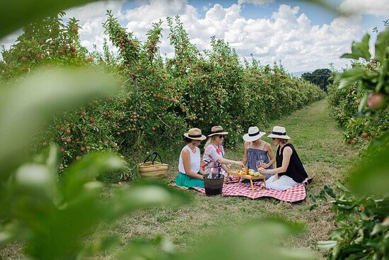 Private Picnic Lunch Experience in Orange with Wine