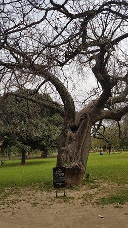 110 year old grandpa tree