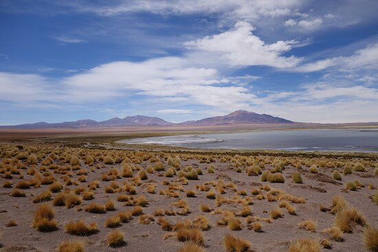 Atacama Region, Chile: Memories of pre-Covid travel: altiplano lake, Atacama Desert.