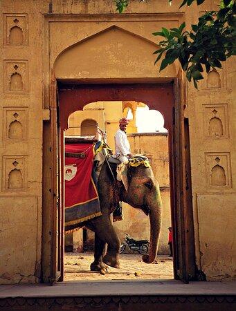 Jaipur, India: Jipur 45