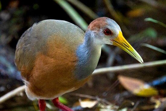Sian Ka'an & Birdwatching Tours By Eddy: Fotografiada tomada en el tour