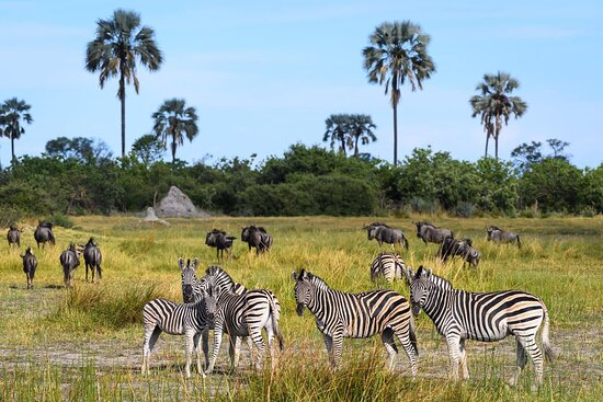 Cuckoo Safaris