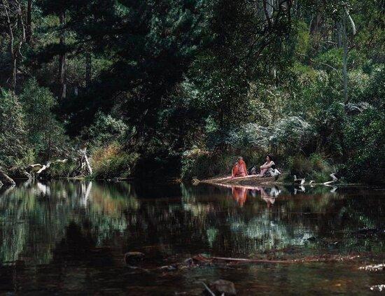 Blackwood Forest照片