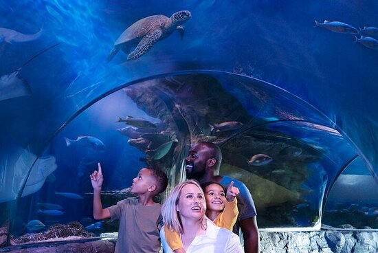 SEA LIFE Aquarium Dallas Admission Ticket
