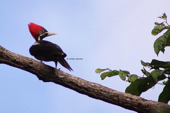 Roadrunner birders