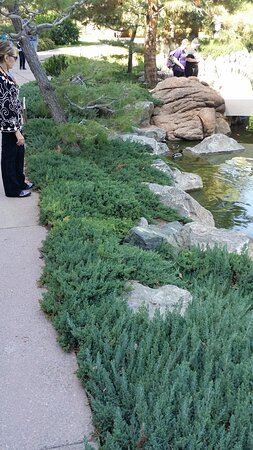 """In the Japanese Friendship Garden, they do a good job with the mass plantings.  This grouping is on the edge of the lake and it really makes the lake """"fit"""" into the landscape."""