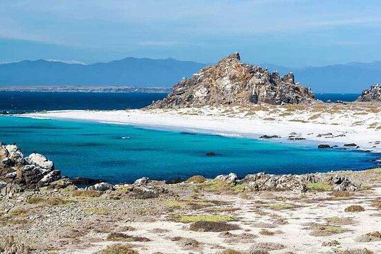 Roadtrip privé de 4 jours à La Serena et dans la vallée d'Elqui...