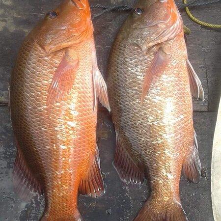 Krabi Town, Thailand: Fishing Krabi