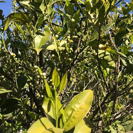 Maracalagonis, Italy: Sardegna i miei limoni
