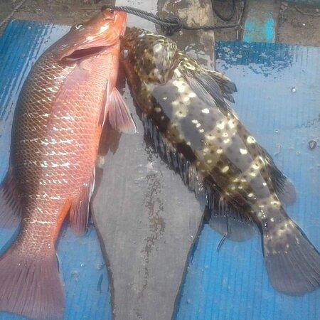 Krabi Town, Thailand: One day and half day Fishing in Krabi Thailand