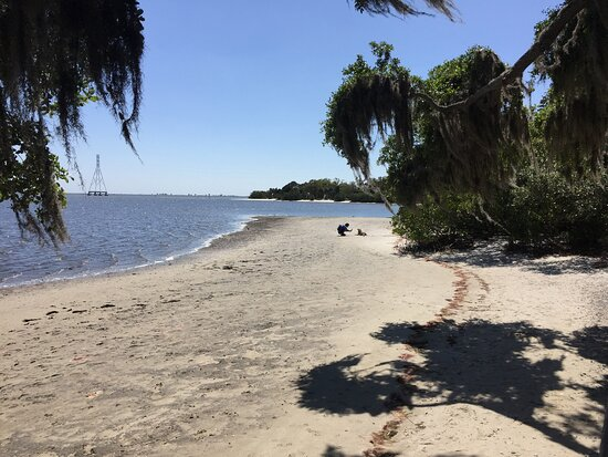 Beqch at Phillippe Park, Safety Harbor