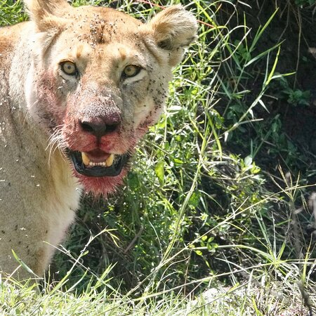 Civvet African Tours & Safaris