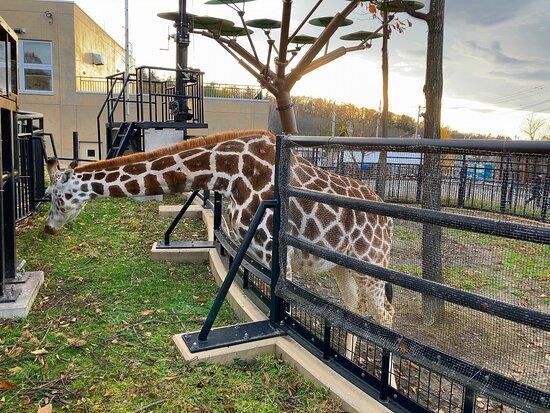 旭川には特に用事は無かったが、旭山動物園に行く為だけに来た感じです♪ 初めての旭山動物園でしたが、TVや口コミ通り「創意工夫」で頑張っている動物園と思いました。 動物の種類などは他の動物園とさほど変わらない感じですが、大人でもワクワク感は非常にある動物園だと思います。  旭川市街地から近く、お勧めな動物園です♪