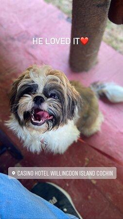 A happy Pet friendly brunch