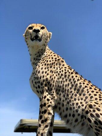 Gosheni Safaris Africa