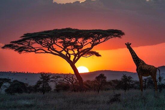 Africa Sights Safaris