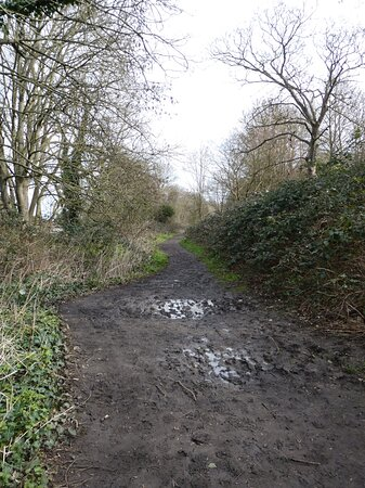 Brenchley Garden, Honor Oak, South London:the from railway track