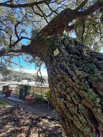 Sin colas: entrada a Villa Durazzo Pallavicini: alberi secolari