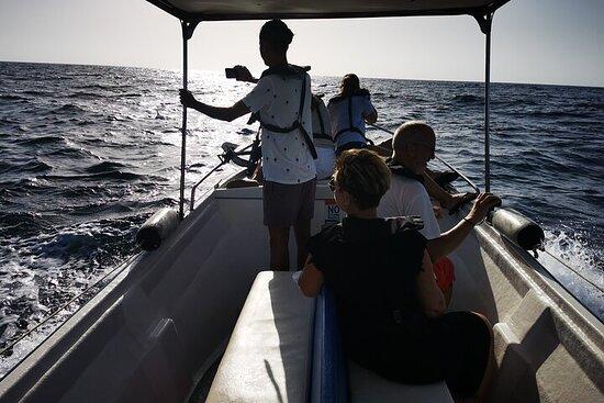 5 Hour Private & Safe Boat Tour in Algarve (Ria Formosa islands)