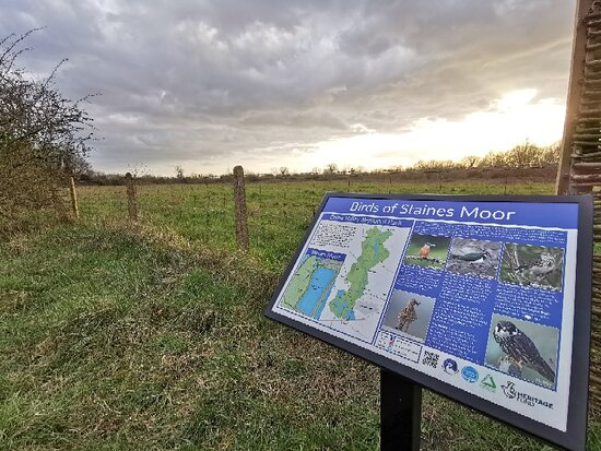 Staines Moor
