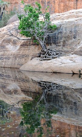 Guelta d'Archei 76