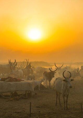 South Sudan: Sudan del Sud 67