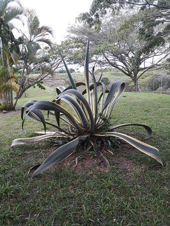 Decameron Las Heliconias