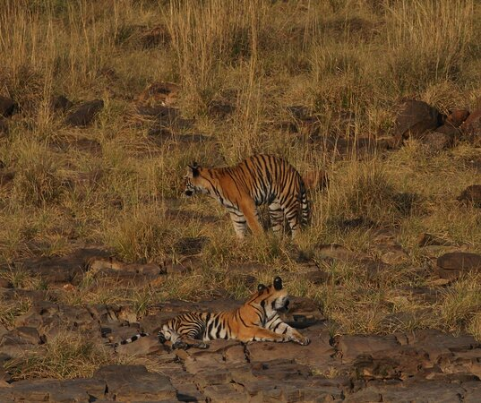 Panna Tiger Reserve Photo