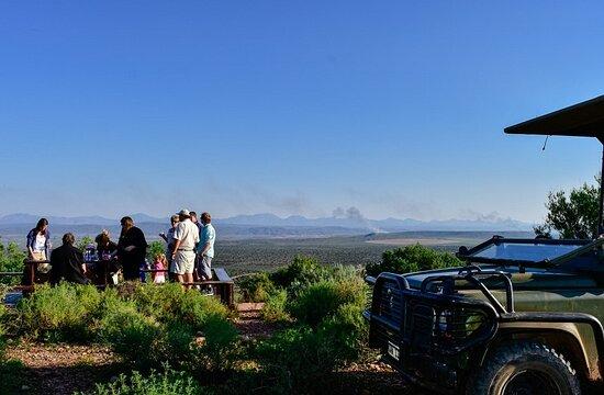 Bush Safaris