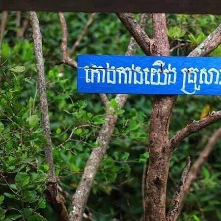 Trooping Sangkae, Kampot Planting mangrove trip🇰🇭